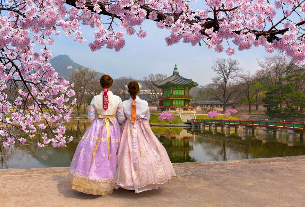 Cherry blossoms in full bloom at Gyeongbokgung Palace in Seoul, South Korea