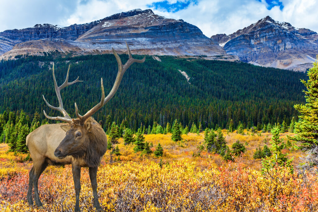 Gorgeous scenery and wildlife of the Rockies