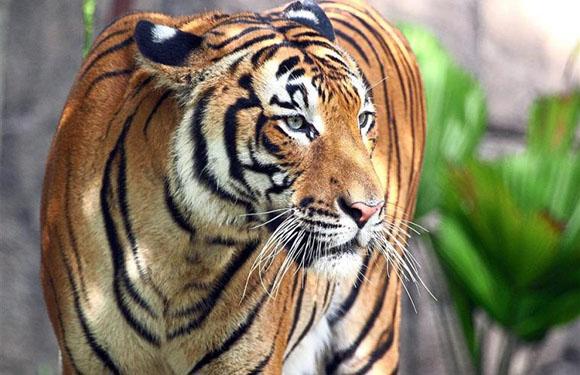 Animals in Danger of Extinction 3