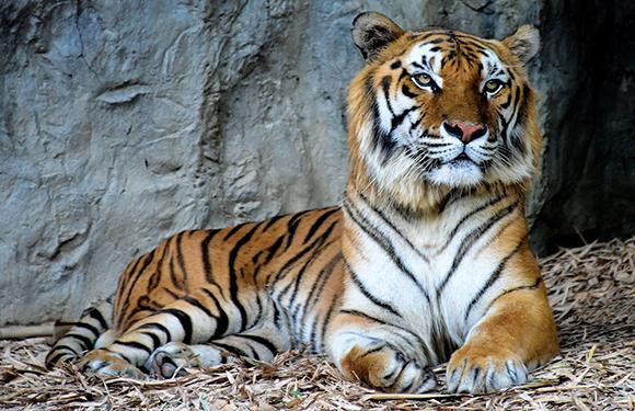 Animals in Danger of Extinction 4