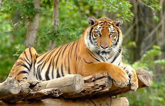 Animals in Danger of Extinction 6