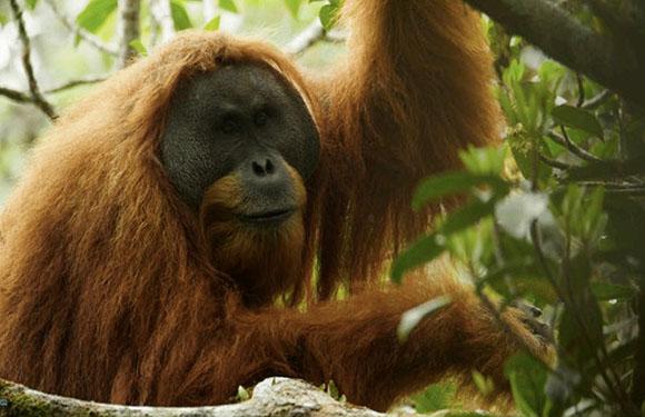 Animals in Danger of Extinction 7