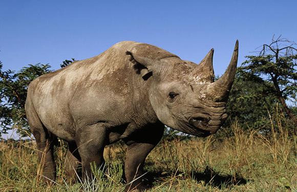 Animals in Danger of Extinction 8