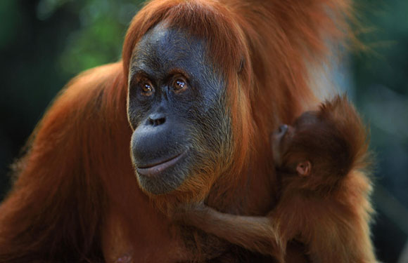 Animals in Danger of Extinction 9