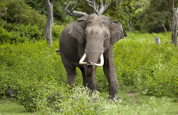Animals in Danger of Extinction 10