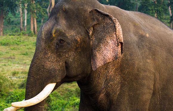 Animals in Danger of Extinction 11
