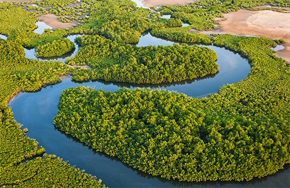 Saloum Delta National Park