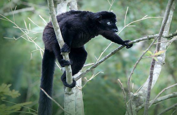 Animals Living in Madagascar 5