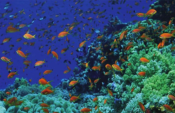 Snorkel Diving