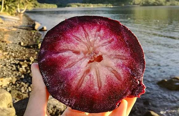 Rare Fruits in the World (Our Top 10 Picks) 4