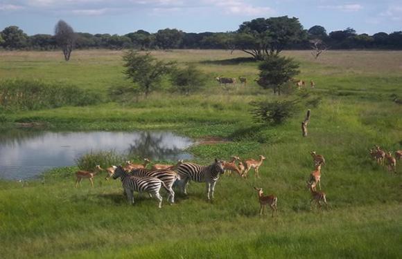 Mukuvisi Woodland Nature Reserve
