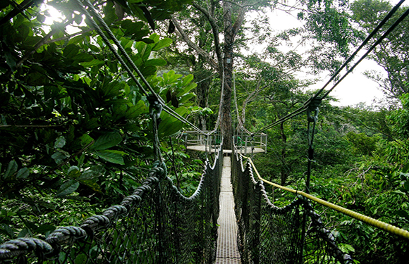 Iwokrama Forest